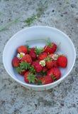 Garden strawberries Stock Images