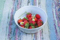 Garden strawberries Stock Photos