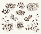 Garden strawberries. Set of vector sketches Royalty Free Stock Images