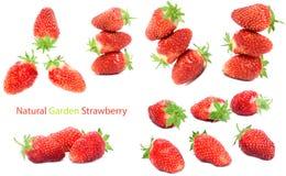 Garden strawberry Stock Photos