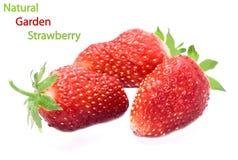 Garden strawberry Royalty Free Stock Photos