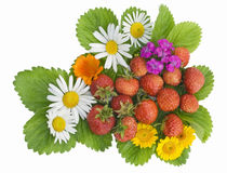 Garden strawberry and flowers mix. Large garden wild strawberry with camomiles on green leaves background. Isolated on white Stock Image