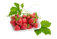 Garden strawberry fruits with leaves, stems and flowers in tray Stock Photography