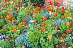 Garden, street, color, tulips, flowers. Multi color garden red blue white Royalty Free Stock Images