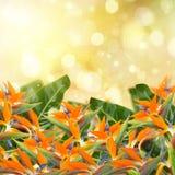 Garden with strelitzia flowers Stock Photo