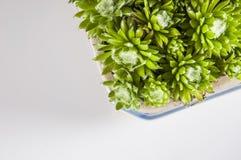 Garden stuff on bright blue background Royalty Free Stock Photos
