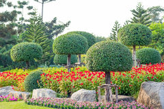 Garden in Suan Luang Rama 9 Royalty Free Stock Photo