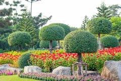 Garden in Suan Luang Rama 9 Royalty Free Stock Photo