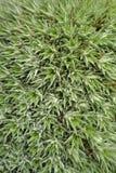 Garden: succulent plant detail Stock Images