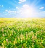 Garden sun Royalty Free Stock Image