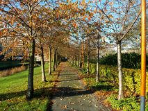 A garden at a Sunny autumn Day in Amstelveen Holland Royalty Free Stock Photos
