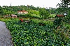 Garden at Sunset in Bento Goncalves Stock Photo