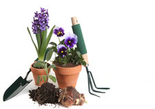 Garden Supplies of Pansies, Hyacinth, Sage Stock Photo
