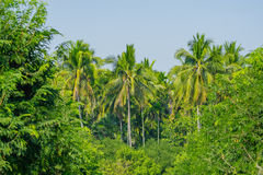 The garden is surrounded by coconut trees. Royalty Free Stock Photography