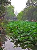 Garden in Suzhou near Shanghai, China Royalty Free Stock Photography