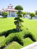A garden. A tako decorated with star-shaped bush in green lawn Stock Photography