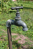 Garden tap Royalty Free Stock Images