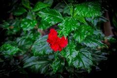 Garden in Thailand Chatuchak 5. Public park Royalty Free Stock Photos