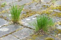 Garden tiles and grass Stock Photo