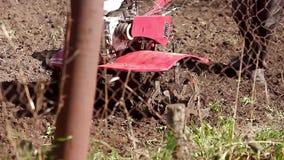 The garden tiller to work close up, walk-behind tractor stock video