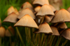 Garden Toadstools Royalty Free Stock Images