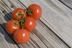 Garden Tomatoes Stock Photography