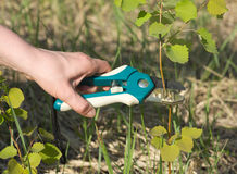 Garden tool in action Royalty Free Stock Image