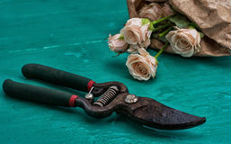 Garden tool and fresh roses royalty free stock photo