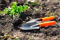Garden tools in the beds Stock Photo