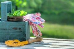 Garden tools in a blue wooden tool box Stock Photos