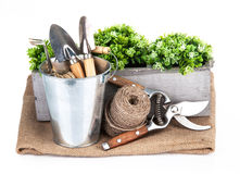 Garden tools in bucket with green plant Royalty Free Stock Photography