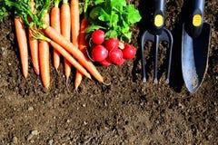 Garden tools, carrots and radish in soil. Garden tools, carrots and radish in soil  on a white background Stock Image