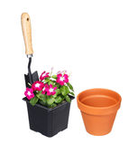 Garden tools and flowers with pot isolated on white Stock Photos