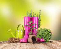 Garden tools with fresh plants Royalty Free Stock Images