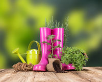 Garden tools with fresh plants Stock Photo