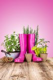 Garden tools with fresh plants Stock Photography