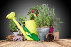 Garden tools with fresh plants Royalty Free Stock Photos