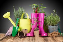 Garden tools with fresh plants Stock Image