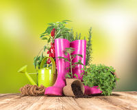Garden tools with fresh plants Royalty Free Stock Photo