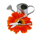 Garden tools with gerberas Stock Images
