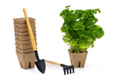 Garden tools with green plant in pot Royalty Free Stock Image
