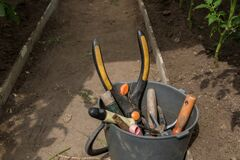 Free Garden Tools Lie In A Bucket In A Greenhouse. Gardening Tools. Royalty Free Stock Photos - 190306018