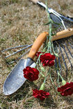 Garden Tools over dry grass background. Garden tools on dry grass with red carnations with focus on grass stock image