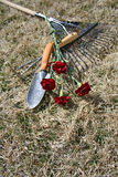 Garden Tools over dry grass background. Garden tools on dry grass with red carnations with focus on grass royalty free stock photo