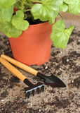 Garden tools with plant on wooden background Royalty Free Stock Photos