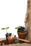 Garden tools and plants royalty free stock images