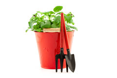 Garden tools with plants on white background Stock Photo