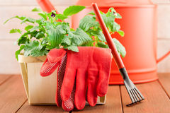 Garden tools with plants on wood background Stock Images