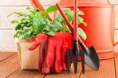 Garden tools with plants on wood background Royalty Free Stock Photo