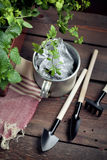 Garden tools and a pot of seedlings in a garden shed Stock Image